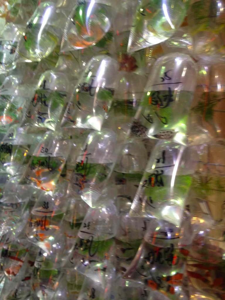 香港で魚を買うなら