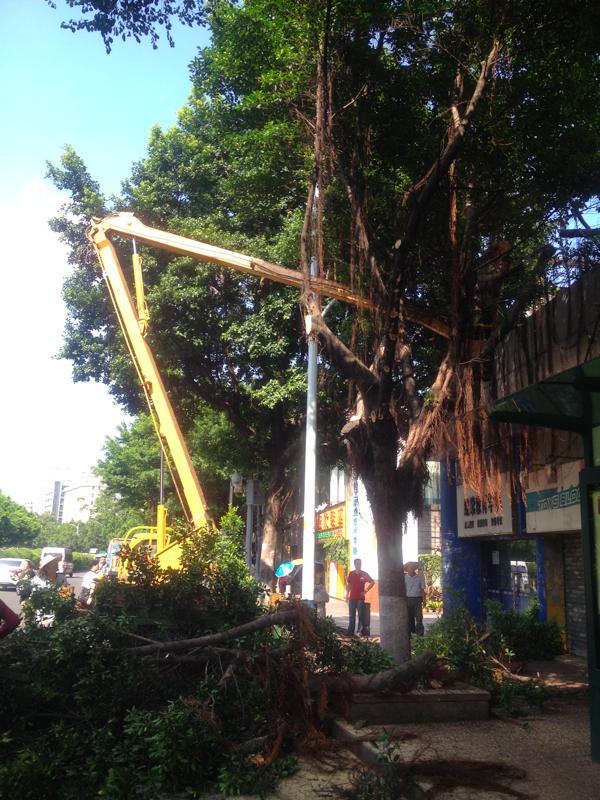 広州木の伐採